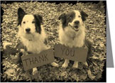 Border Collies Thank You