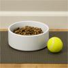 Large Pet Bowl